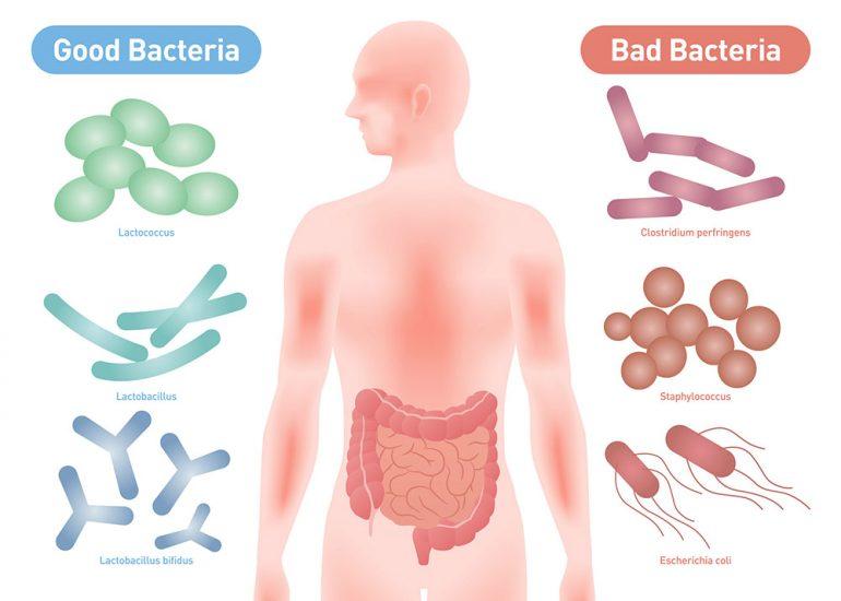 腸内細菌(フローラ)検査